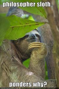 philosopher sloth